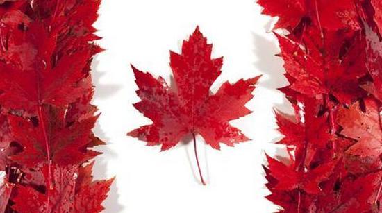 对冲美国贸易壁垒!加拿大思考应变之策 (图)