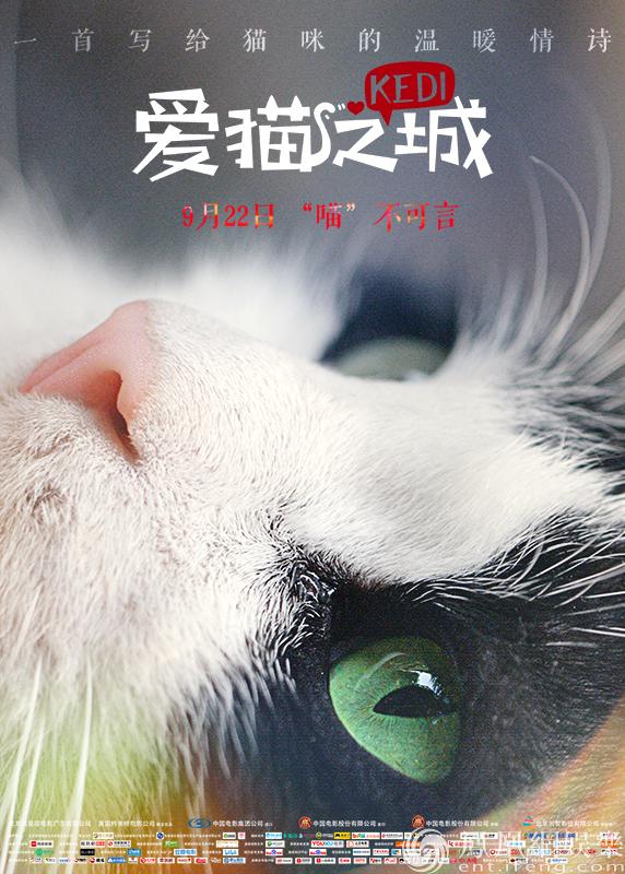 《爱猫之城》终极预告海报双发 暖心喵喵治愈心灵