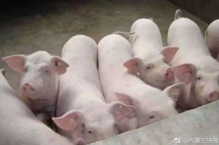 内蒙古自治区呼和浩特市发生一起非洲猪瘟疫
