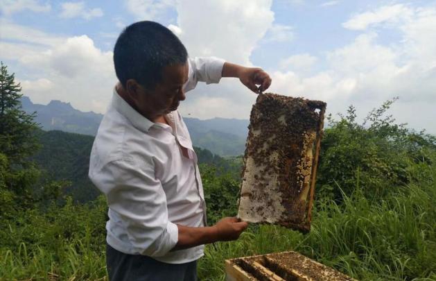 """深山养蜂人白天树:带领村民脱贫酿出""""甜蜜""""事业"""