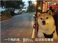 白色情人节:谁说单身狗不配过节
