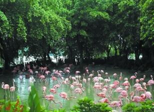 珠三角将建成全国首个国家森林城市群