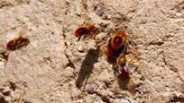 惊呆!小蜜蜂从墙上拔出一颗长钉