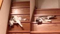 岛国一位主人拍下了自家猫咪下楼梯的妖娆姿态
