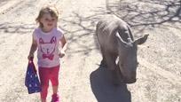 萌化了!小萝莉带着犀牛宝宝散步