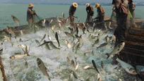 实拍男子开船去钓鱼 只做一动作上千条鱼自投罗网