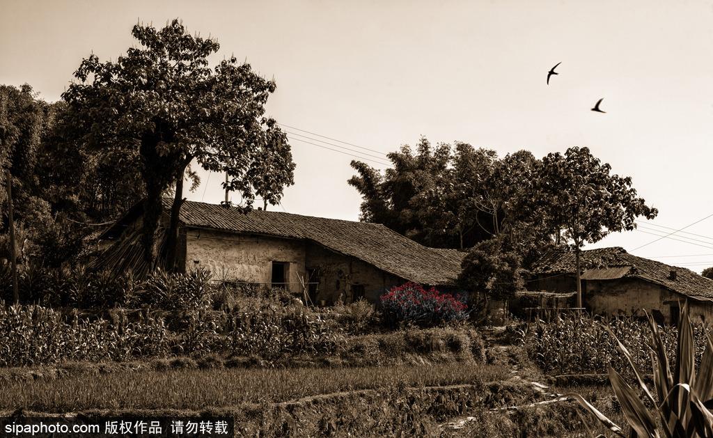 贵州威宁黑石采基内容|贵州威宁黑石采基版面设计