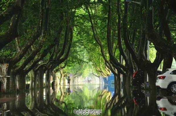 南京理工暴雨后 奇幻森林 刷爆朋友圈 美呆了 图图片