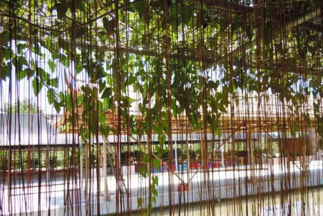 你家种上这20款爬藤植物 隔热降温还净化空气!