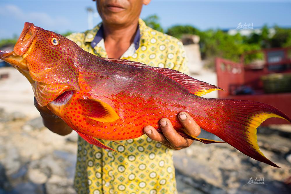 每年春天,渔民从海南岛来到这里,在赵述岛的礁盘上打鱼,然后在岛上把