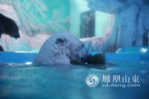 蓬莱海洋极地世界萌兽避暑 表情包萌过傅园慧_山东
