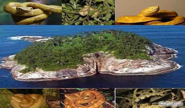 2,蛇岛——巴西大凯马达岛,又名蛇岛,占地面积43公顷,是位于巴西东