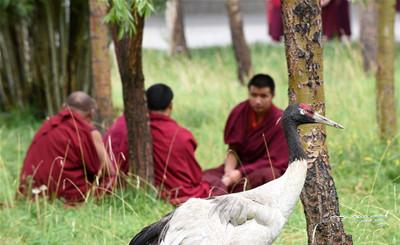 寺庙脚下 生活着一群受伤的野生动物