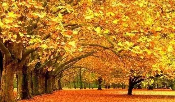 秋天猕猴桃简笔画