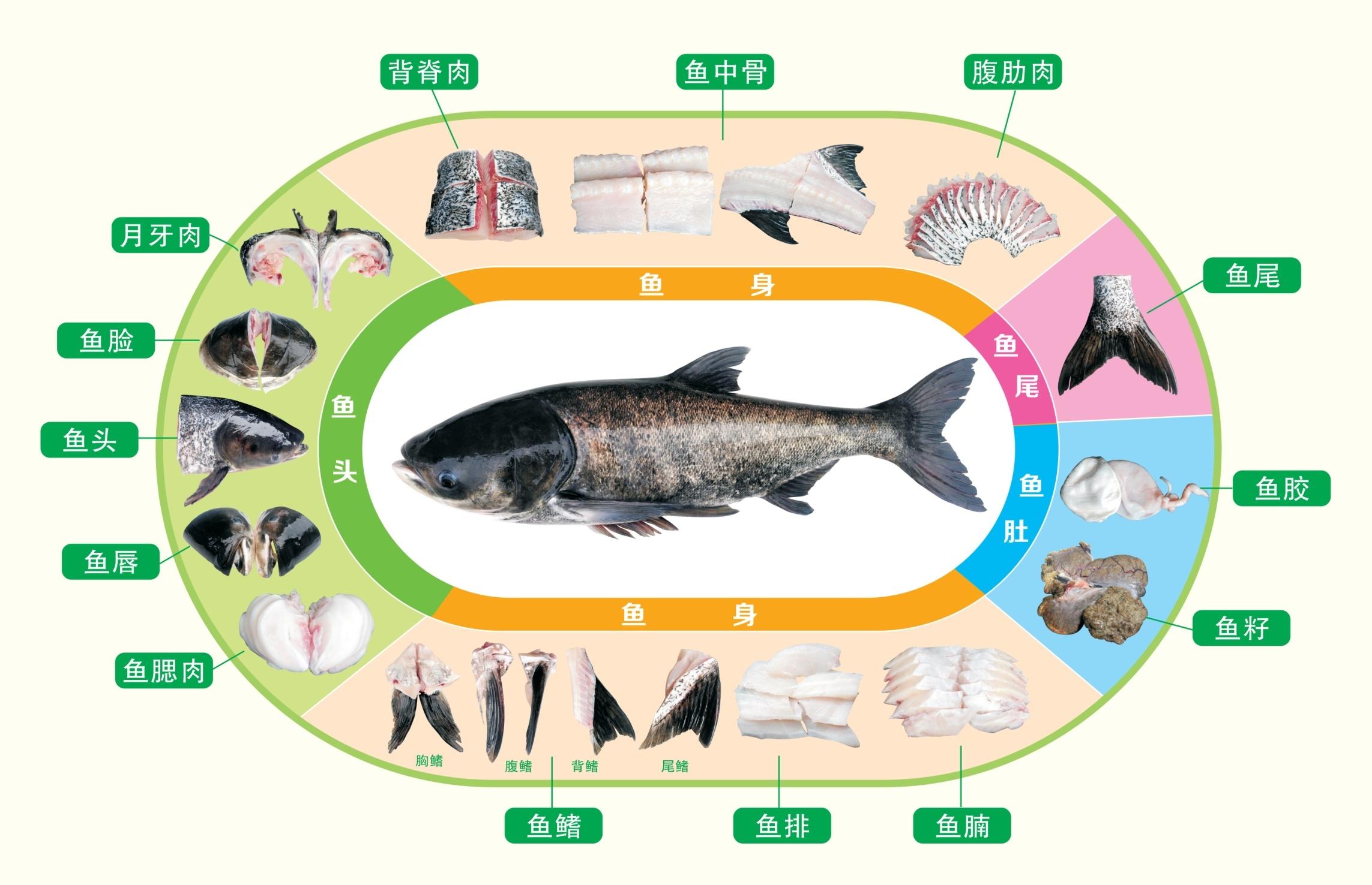 千岛湖鱼头大餐