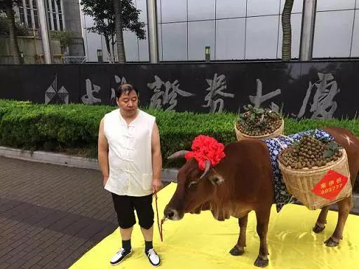 这家公司为庆祝上市 竟带一头牛到上交所走秀(图)