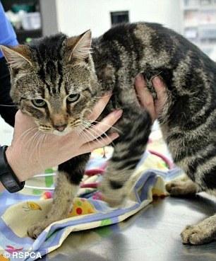 被锁家中 14只猫互食充饥剩1只生还 - 梅思特 - 你拥有很多,而我,只有你。。。