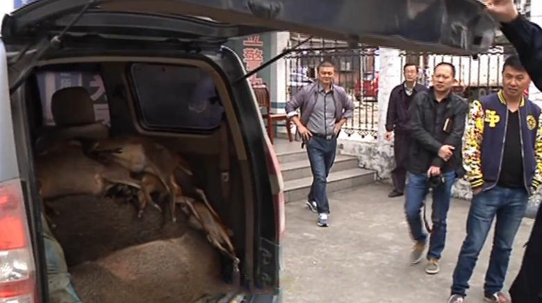 警方拦截一车:里面全是野生动物 - 梅思特 - 你拥有很多,而我,只有你。。。