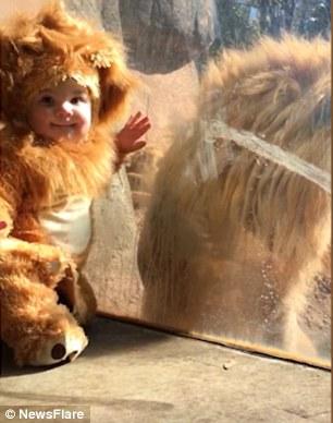 超萌宝宝穿着狮子连体衣到动物园 真的狮子陪他玩