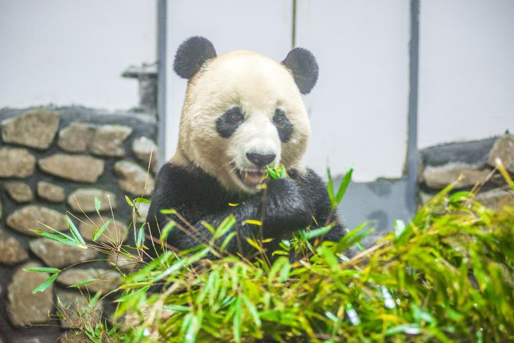 连国宝大熊猫都选择在这里栖息,看了下面的一组消息你就会明白了.