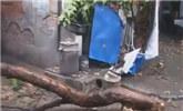 南京:树枝枯烂断裂 砸坏三家房顶