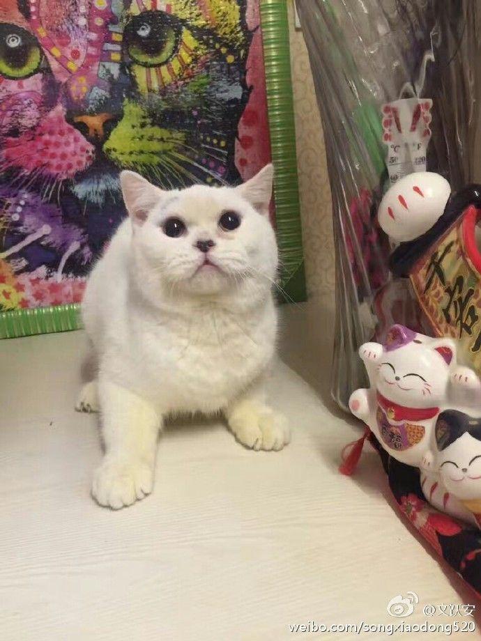 剥猫皮女子视频道歉:因交不起房租 网友:这就是你虐猫的理由
