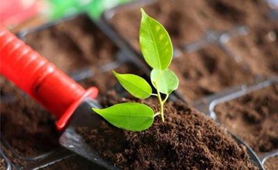 中科院成功研制土壤修复新材料!每亩成本不超30元