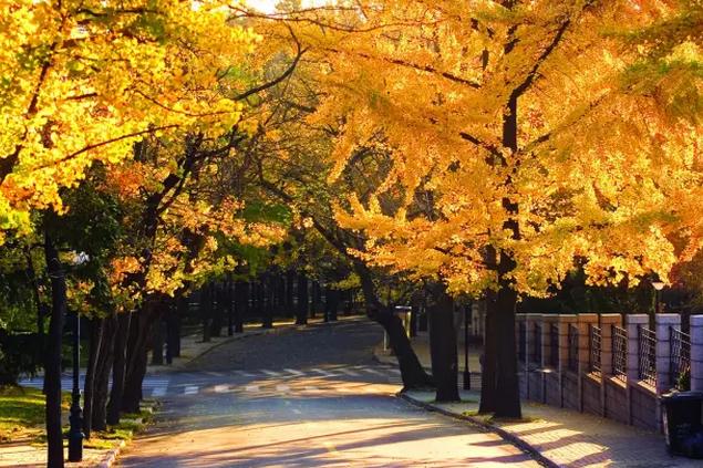 青岛天气丨春天来了!这是2017年第1个14°c的周末!