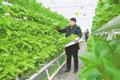 赣州:无土水培蔬菜喜丰收