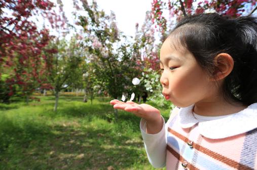 """4000余株海棠花遍布长白岛森林公园内,""""淡淡微红色不深,依依偏得似"""