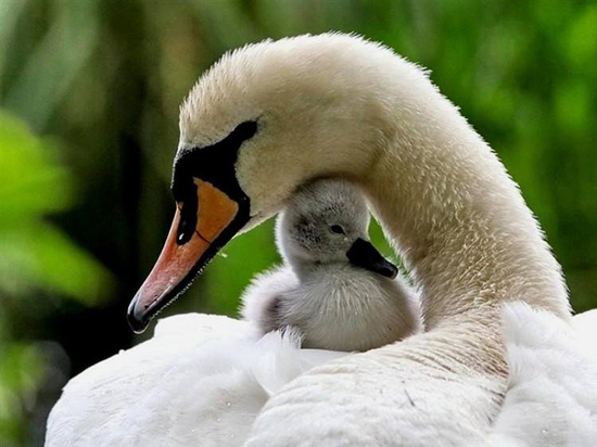 母爱无疆——温馨暖人的动物母子亲昵瞬间