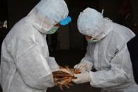 陕西省确诊首例H7N9病例