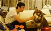 王思聪带宠物坐飞机