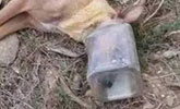 熊孩子给流浪狗头上套塑料瓶 小狗活活被憋死