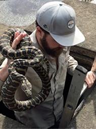 蟒蛇被困 男子进下水道救出