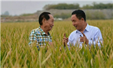 水稻亩产再刷纪录!