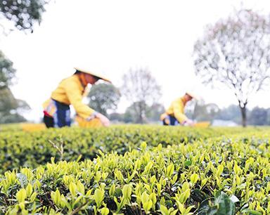 """派发""""礼包"""" 长沙打造50个全国知名农产品品牌"""