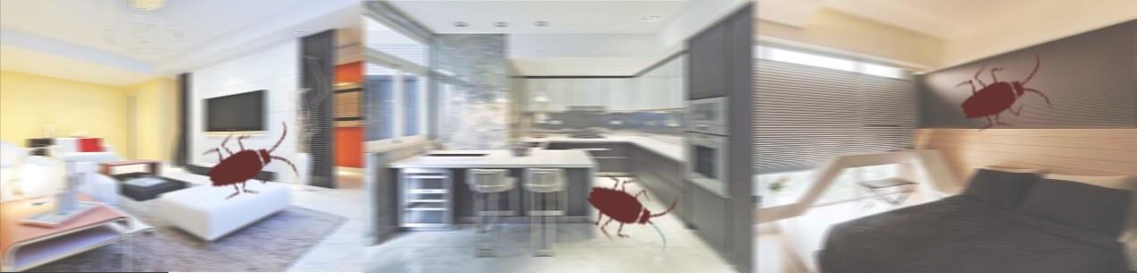 小强困扰普遍存在 灭蟑重在家居清洁