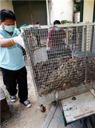 """""""蛇满为患""""的曼谷"""