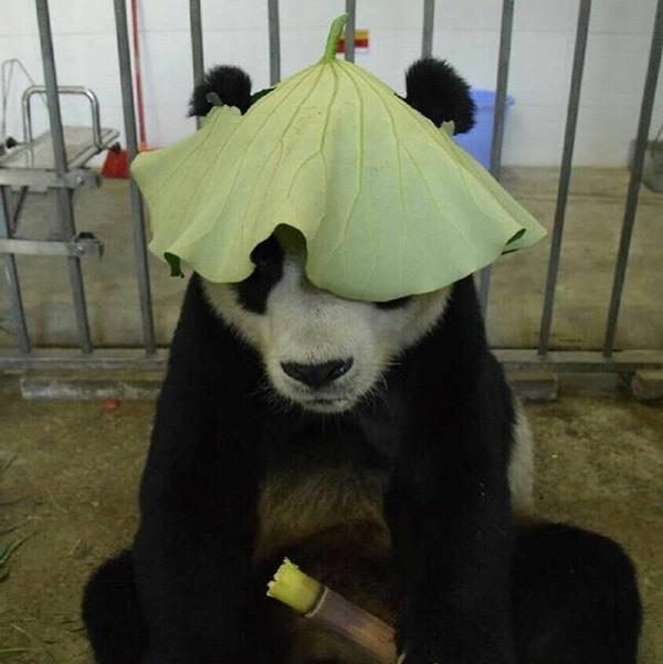 """大熊猫""""鹏鹏""""走了,生前温馨照片令网友泪奔"""
