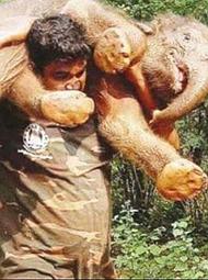 男子肩扛小象