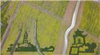航拍高邮湖郊野油菜花巨型画 图案为文化古迹