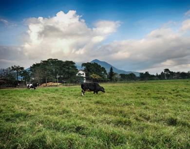 农业农村部推介20个休闲观光牧场