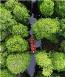 兴化水上森林画中游 绿意扑面