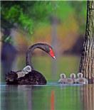 池杉湖之景 | 翠绿欲滴 万鸟齐鸣
