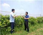 民權縣副縣長孟祥亮調研冷谷紅葡萄種植基地
