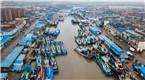 台风过境 大批渔船回港避风