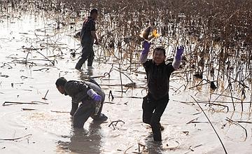 黄河水退去人们破冰摸鱼,一天摸上百斤