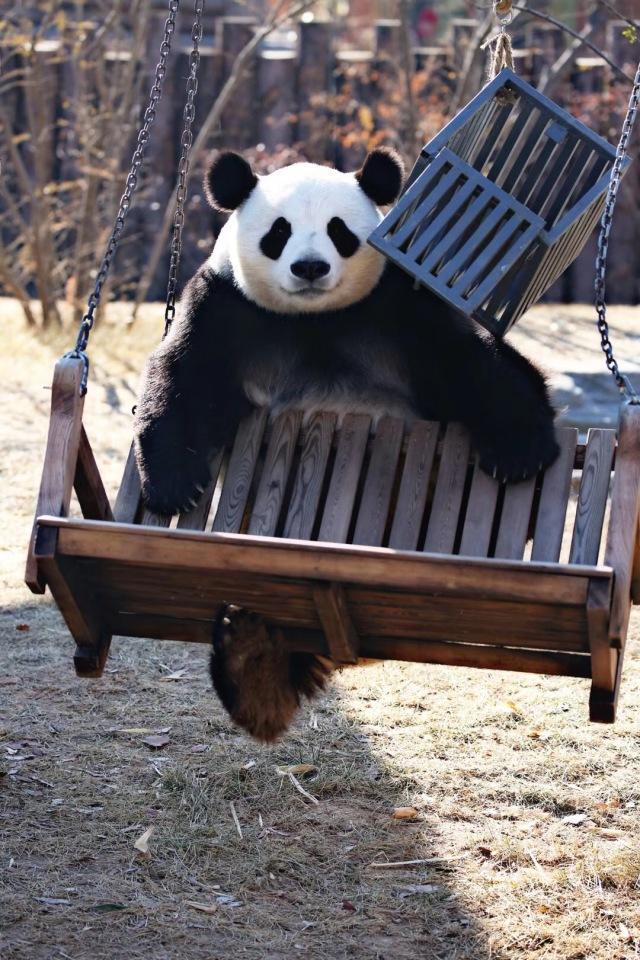 2018春节感恩游济野 和动物们一起狂欢过大