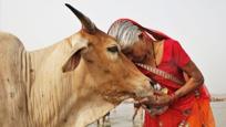 晓说:去印度旅游的禁忌,千万别碰牛